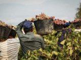 regolarizzazione lavoratori stagionali migranti coldiretti non risolve problema