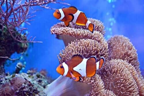Giornata Mondiale Oceani, le proposte di Ambiente Mare Italia