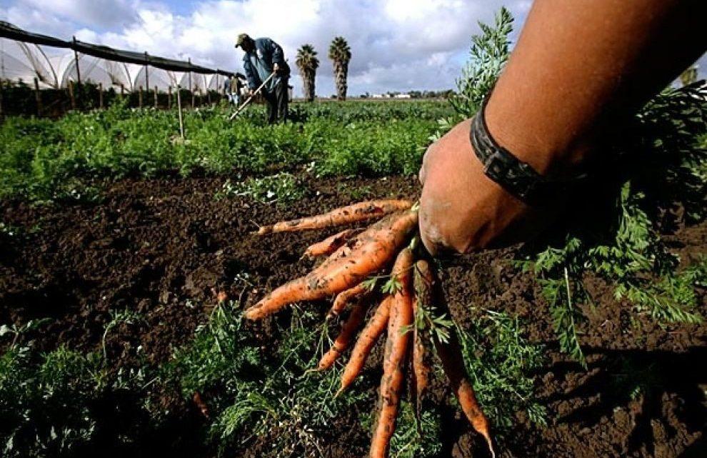 Coldiretti: col green pass obbligatorio a lavoro, forniture alimentari a rischio